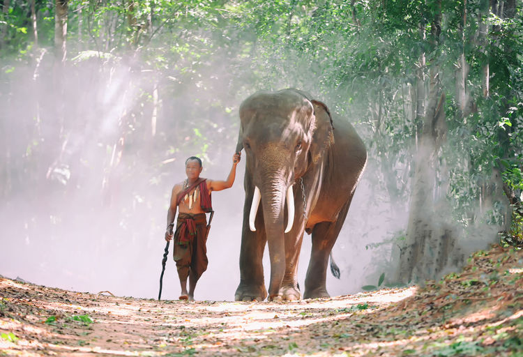 Man walking with elephant by trees in forest