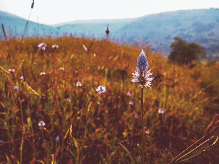 ☀️ ☀️ EyeEm Best Shots EyeEmNewHere EyeEm Nature Lover EyeEm Selects First Eyeem Photo Hill Valley Awesome Scenics Flower Head Flower Beauty Mountain Uncultivated Wildflower Springtime Meadow Close-up Sky Flowering Plant Plant Life Botanical Garden Plant Part Tropical Flower