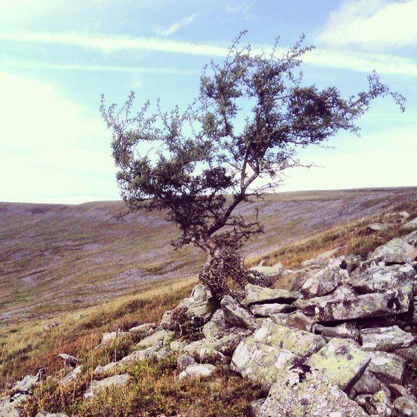 Lone tree Lonely Tree Hillside Nature Lichen Lichen On A Tree