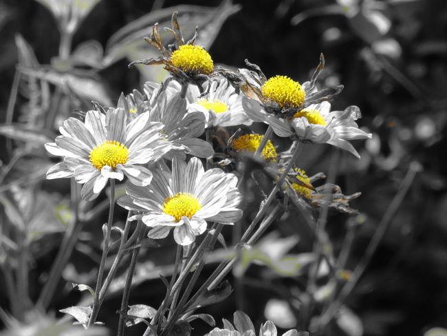 Flower Petal Nature Plant Yellow Photo Followme EyeEm BeautifulNo People Followback