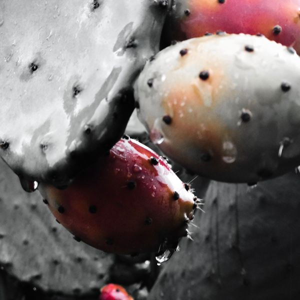 Ficus red Fruit Food And Drink Food Red Healthy Eating Close-up Freshness No People Growth Day Outdoors Nature Pomegranate Prickly Pear Cactus