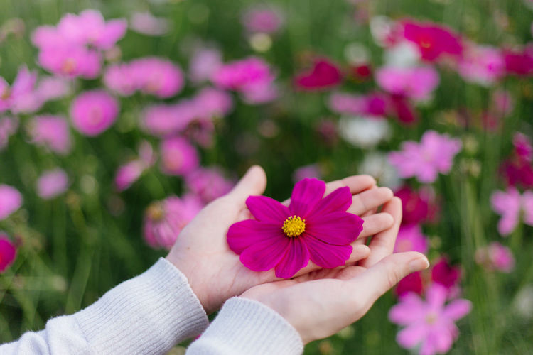 Hand gives a wild pink flower with love. romance, feelings. Adult Adults Only Beauty In Nature Blooming Close-up Day Flower Flower Head Focus On Foreground Fragility Freshness Growth Human Body Part Human Hand Nature One Person Outdoors People Petal