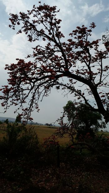 Red And Orange Flowers Cool Winds, Nice Waves ✌ India Trees And Sky Mind Boggling Mind Blowing Nature Perfect_shot Madhya Pradesh,India