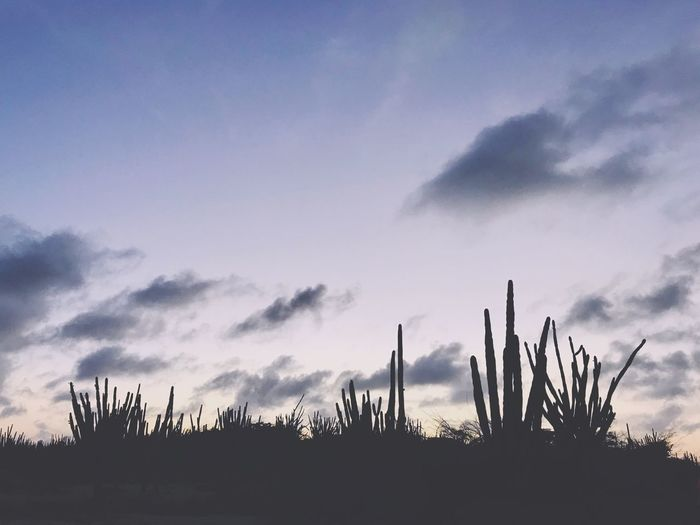 Clouds Arid Climate Arid Landscape Antilles Caribbean Dutch Caribbean Island Travel Cactus Sky Growth Nature No People Tranquility Plant Outdoors Beauty In Nature Day