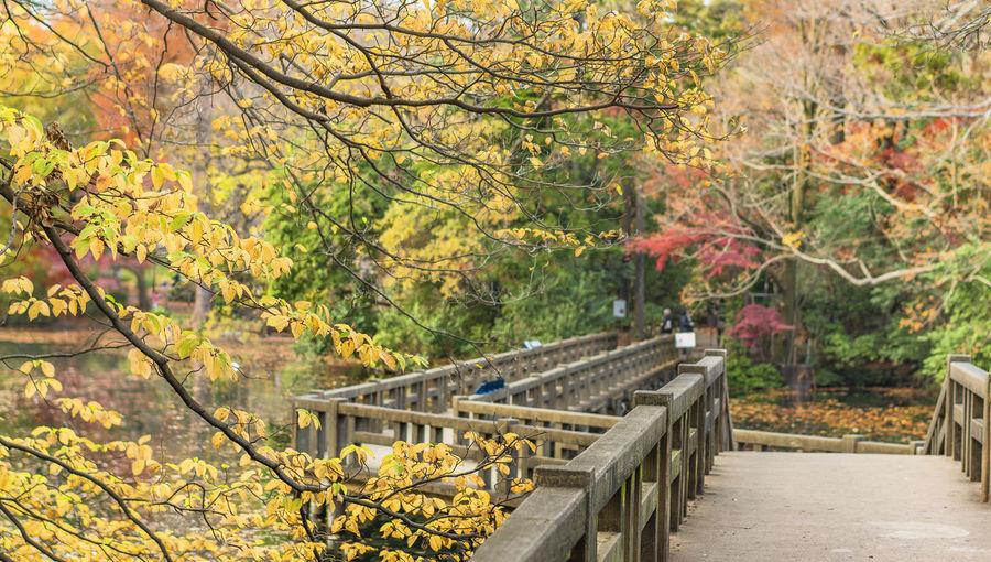 Footbridge amidst trees in park during autumn