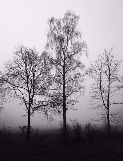 Dark Wood Creepy Fog Foggy Morning Trees Sweden Cold Cold Temperature Autumn No Leafs Nature Bare Tree Branch No People Landscape Outdoors Simple Simple Beauty