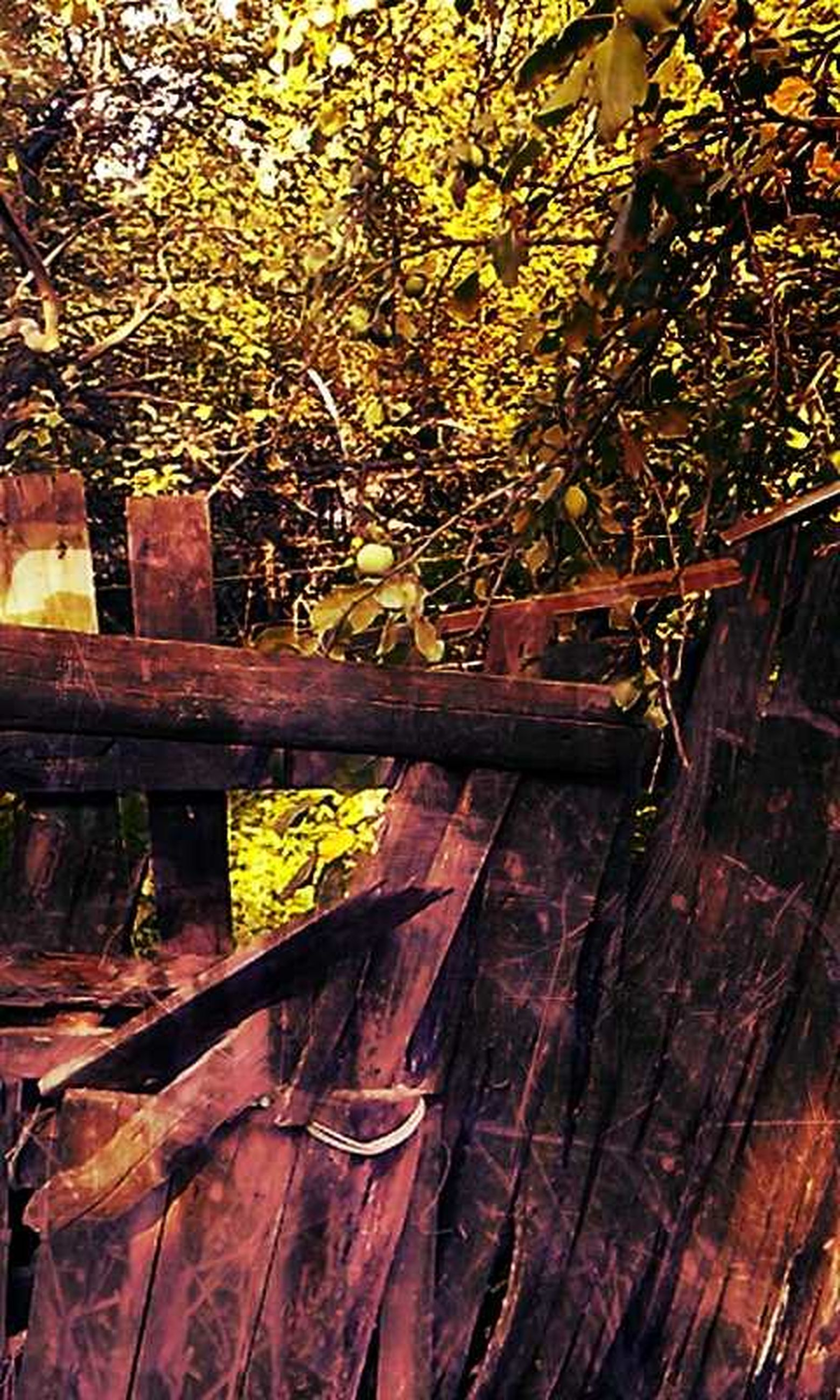 wood - material, tree, wooden, branch, tree trunk, wood, growth, nature, leaf, day, outdoors, no people, old, forest, plank, fence, sunlight, plant, built structure, close-up