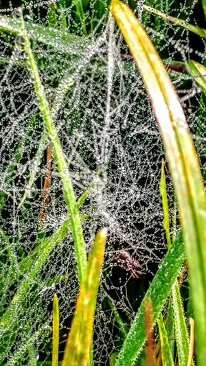 Beautiful Nature... Nature Green Color Beauty In Nature Freshness Plant Original Picture Grass Wendland Spidernet GetbetterwithAlex Backgrounds