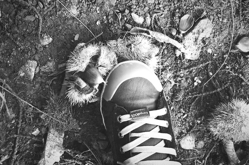 Chestnuts hunting. A Walk In The Woods Chestnuts Explore Black And White