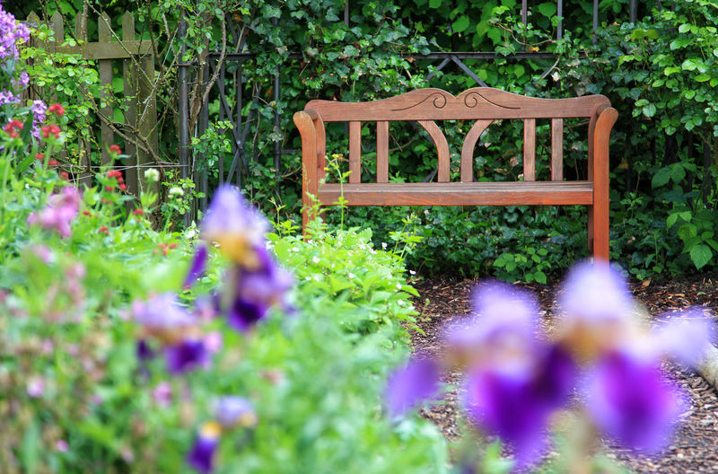 Empty wooden garden bench Bench Chair Green Color Iris Tranquility Beauty In Nature Day Empty Floral Flower Fresh Furniture Garden Growth Hedge Leaf Nature No People Outdoors Park Plant Relaxation Seat Summer Wooden