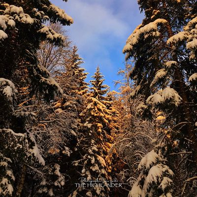 Tree Nature Sky Cloud - Sky No People Outdoors Forest Winter Snow Cold Temperature Beauty In Nature Landscape