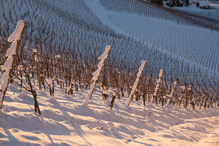 Landscape of sunrise over the the austrian vineyards in winter