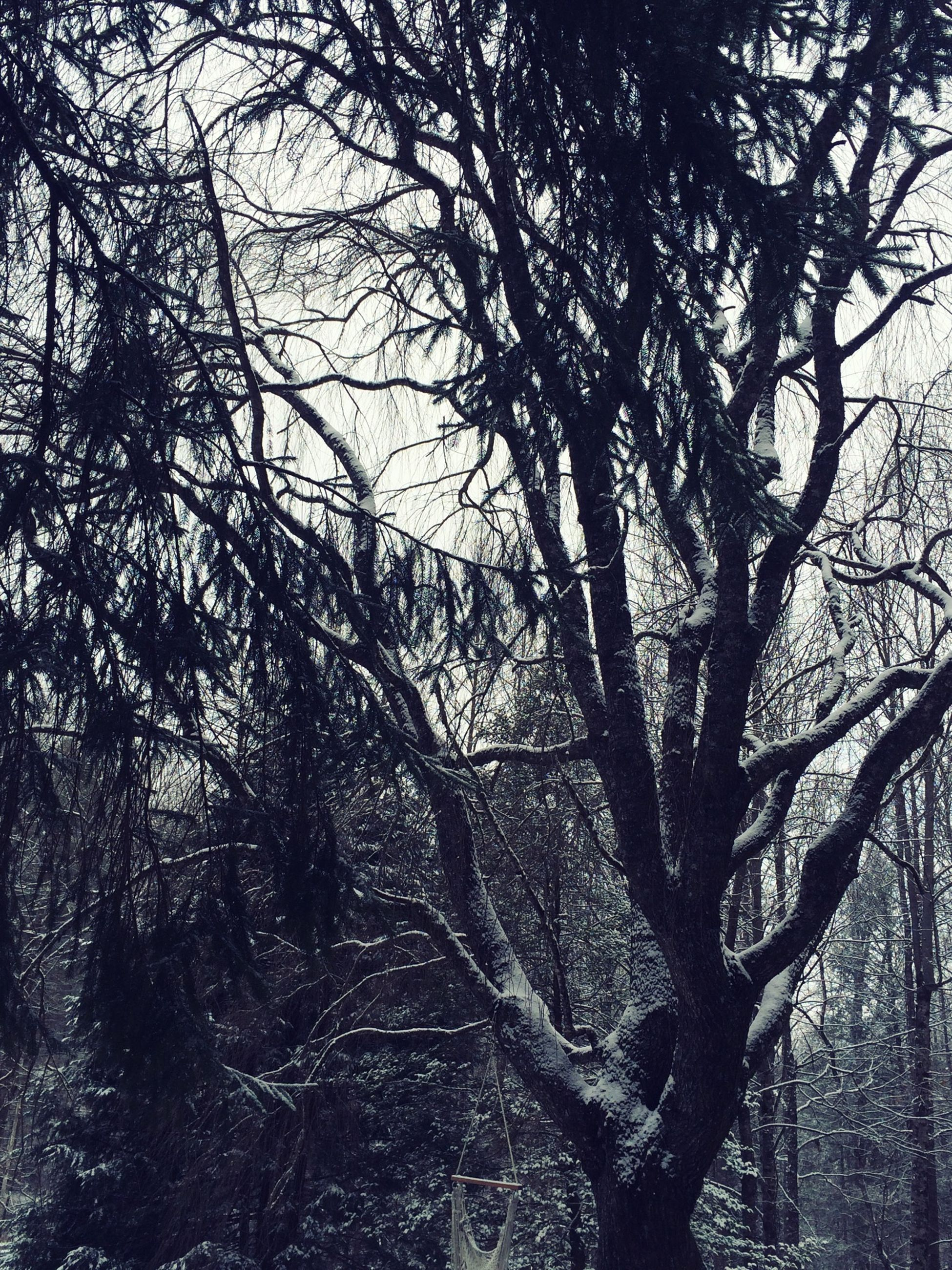 bare tree, tree, branch, tranquility, tree trunk, nature, tranquil scene, scenics, beauty in nature, sky, winter, low angle view, forest, outdoors, season, day, growth, no people, cold temperature, non-urban scene