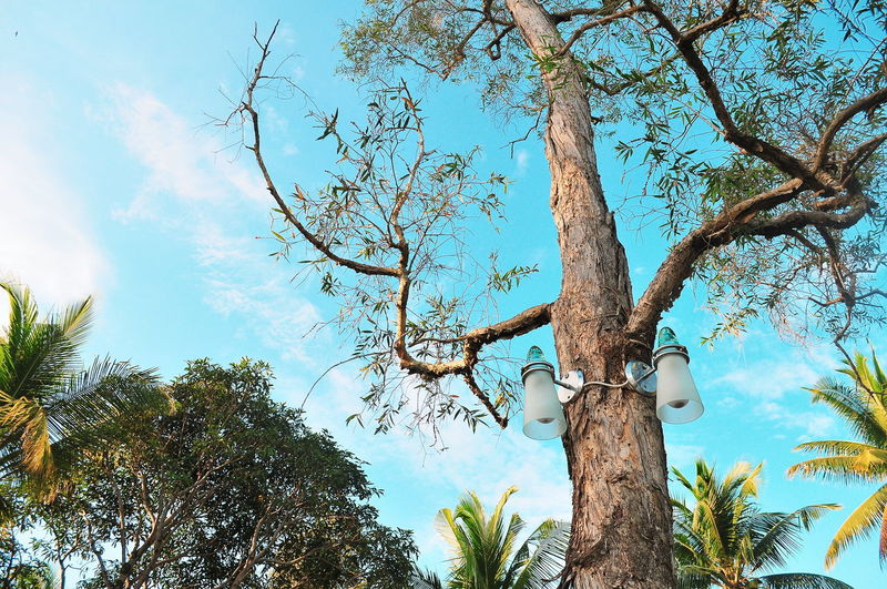 Bintanisland Lamp Lamp Post Tree Branch Forest Pixelated Tree Trunk Sky Close-up Treetop Tree Canopy  Full Frame Sky Only