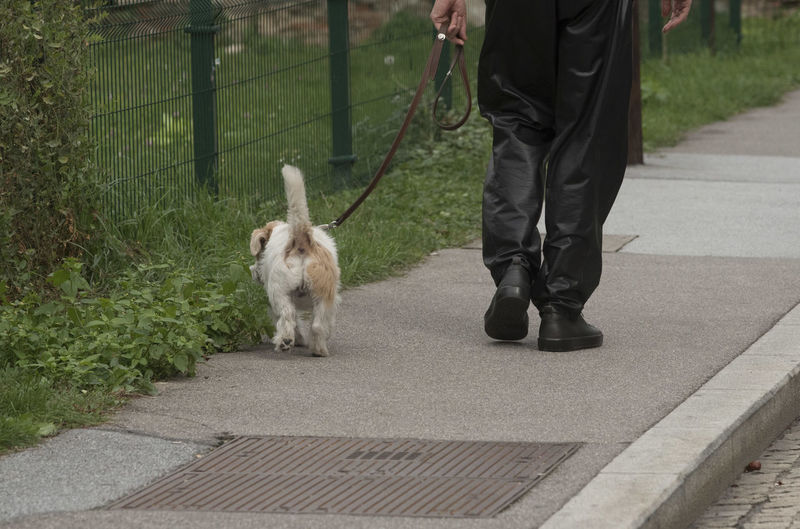Low section of man with dog walking on footpath
