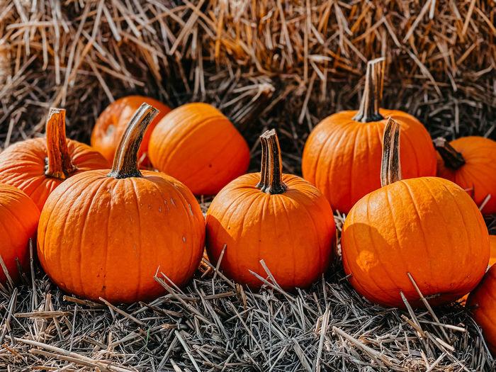 Close-up of pumpkins on field