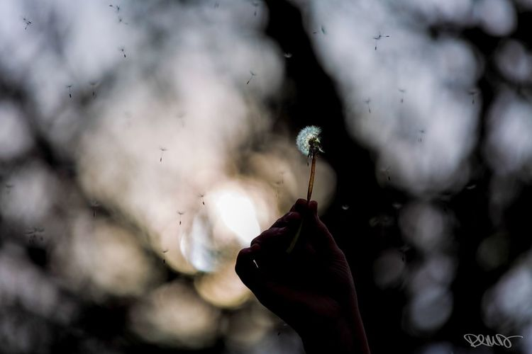 Dandelion Make A Wish Real People Human Body Part Human Hand Close-up People Sky Fragility One Person Focus On Foreground Holding thank you @melodiously