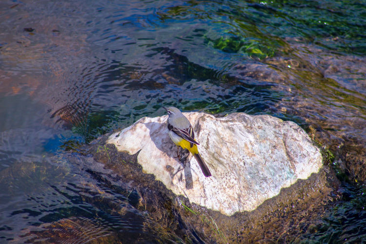 Yellow Wagtail EyeEm Best Shots EyeEm Nature Lover EyeEmBestPics EyeEm Best Shots - Nature Beauty In Nature Wonders Of Nature Rock - Object Bird Water High Angle View Close-up Animal Themes Shallow Clear