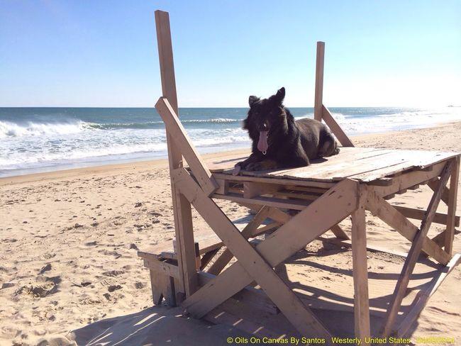 Beach new lifeguard