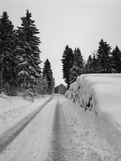 Winterworld Thüringer Wald Tree Cold Temperature Snow Winter Road Pine Tree Pinaceae Forest Sky Landscape Tire Track FootPrint Empty Road Pine Woodland Tree Area