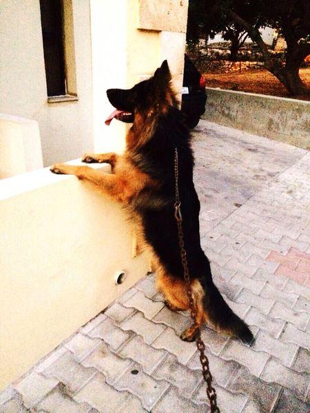 My Backyard DogLove Dogstagram