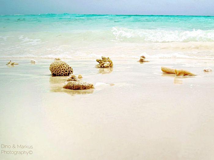 Tadaa Community Ocean Traveling Maldives Beach Island Beautiful Nature Beachphotography Macro Nature Landscape