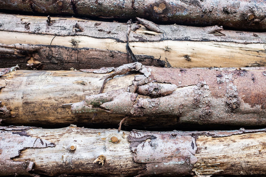 Backgrounds Close-up Damaged Day Full Frame Log Nature No People Old Outdoors Pattern Rough Solid Textured  Timber Tree Wall - Building Feature Weathered Wood Wood - Material