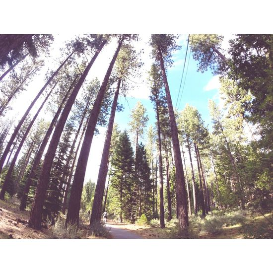 Lake Tahoe Forest Trees Taking Photos Enjoying Life Nature Check This Out Gopro Sun