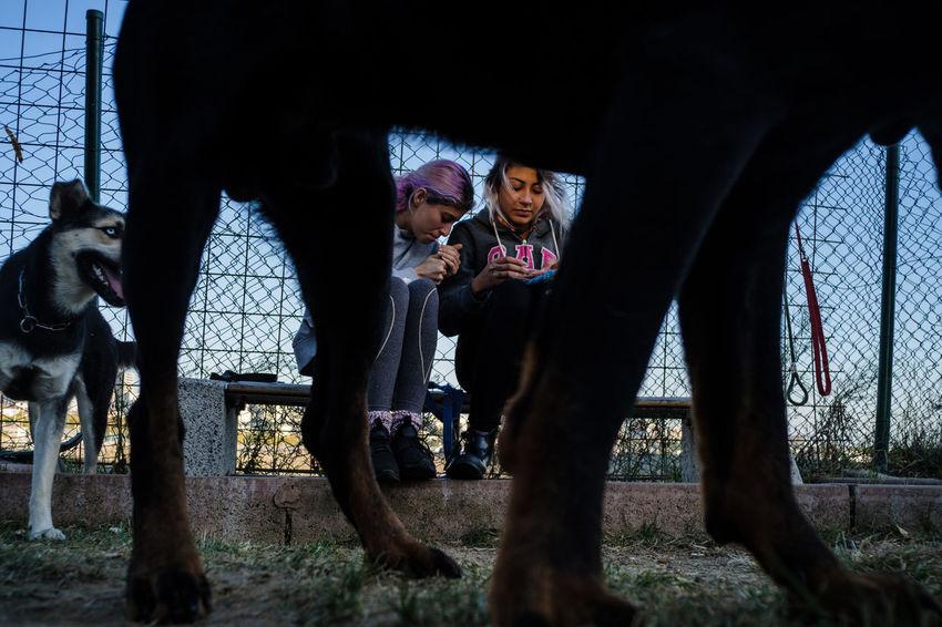 October 2018 Streetphotography Street Photography Streetphoto_color Everybodystreet Streettogs Human Condition Documentary Photography Social Documentary Sokakhikayeleri Dogs