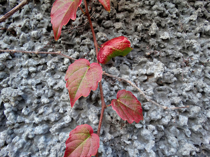 Bunch of leaves. Leaf Plant Part Close-up Red Plant Day Nature No People Growth Outdoors Autumn Beauty In Nature Dry Change Leaves Leaf Vein Vulnerability  High Angle View Food Focus On Foreground Natural Condition