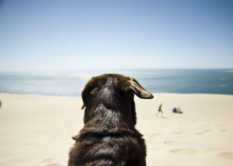 Dog at beach against clear sky