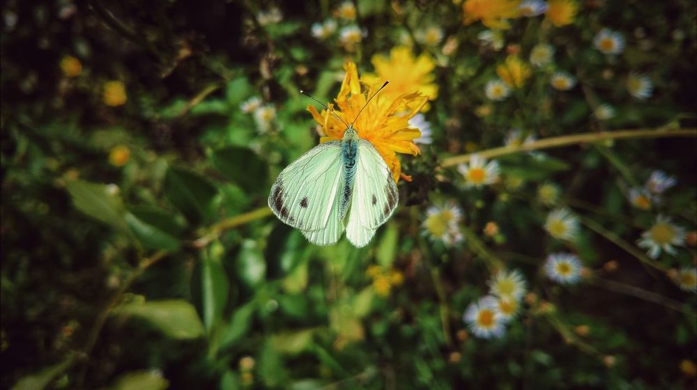 A Butterfly Everyday Emotion Nature Day Outdoors Beauty In Nature EyeEm Best Shots Franken Eyeemphotography EyeEmBestPics EyeEmbestshots EyeEm Selects Focus On Foreground Meadow Meadowflowers Butterfly Collection Butterfly On Flower Butterfly Butterflies And Flowers