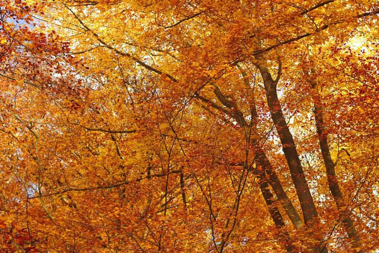 Autumn Beauty In Nature Leaf Nature Orange Color Outdoors Tranquil Scene Tranquility Tree