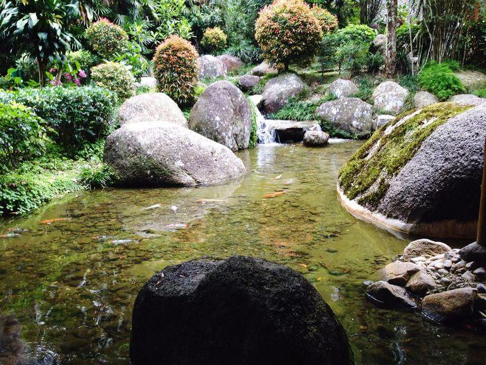 Stream at japanese garden