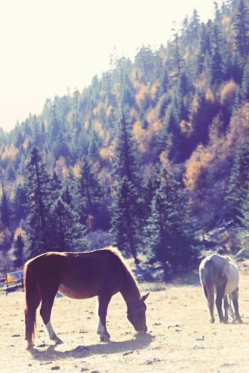 Autumn In Sichuan Leave Something Dangling EyeEm Nature Lover Horses Taking Photos Sunshine EyeEm