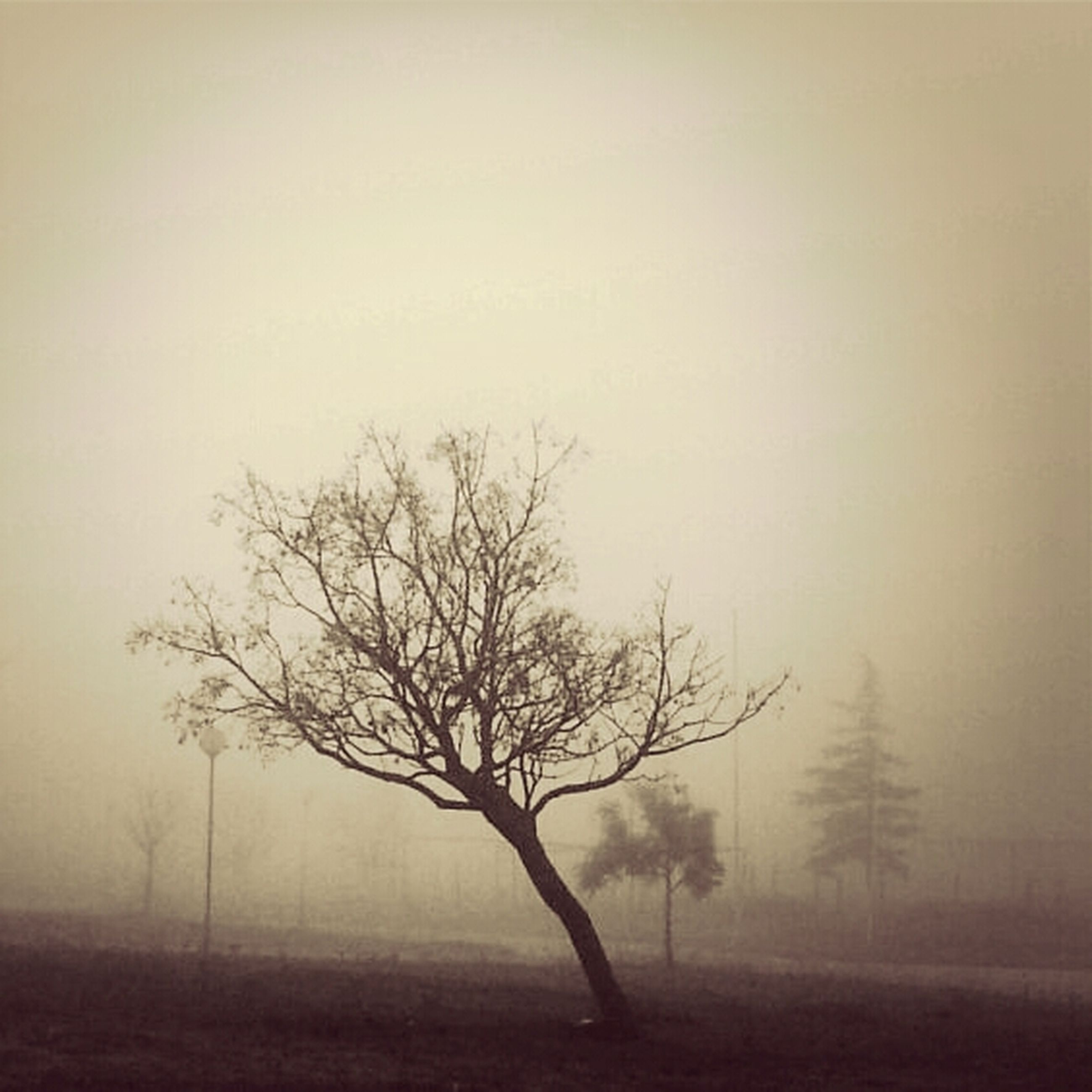 fog, tree, foggy, bare tree, tranquility, tranquil scene, landscape, field, nature, branch, scenics, beauty in nature, weather, tree trunk, silhouette, growth, non-urban scene, copy space, no people