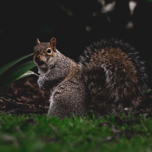 Mammal Adorable Sweet Fluffy Summer Spring Outdoors Park Animal Animal Themes Animal Wildlife One Animal Animals In The Wild Mammal Rodent No People Vertebrate Close-up Squirrel Nature Day Plant Outdoors Looking Portrait Animal Body Part Animal Head