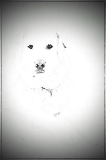 Winter Sammy