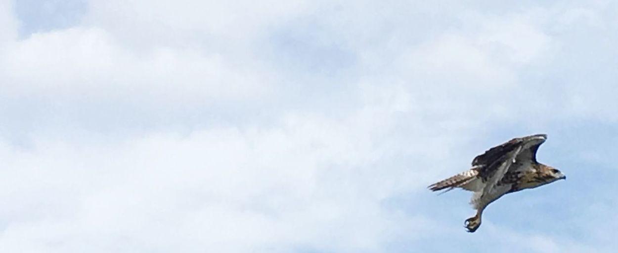Take off Flying Bird