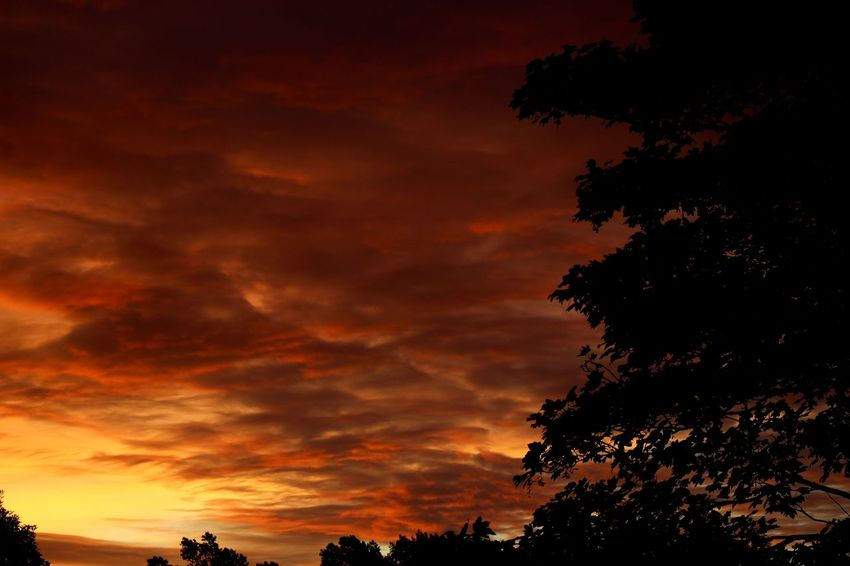 Cloud Daybreak Dramatic Sky Grass Trees Atmospheric Mood Clouds And Sky Early Morning Golden Hour Mid Summer Red Sky Scenics Sunrise