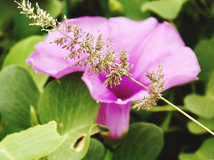 Beauty In Nature Close-up Flower MyPhotography NickonClicks