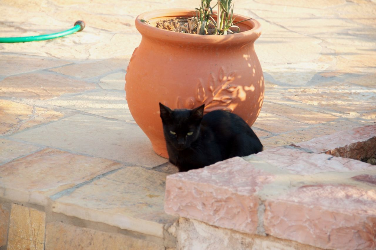 HIGH ANGLE VIEW OF BLACK CAT SITTING ON POT