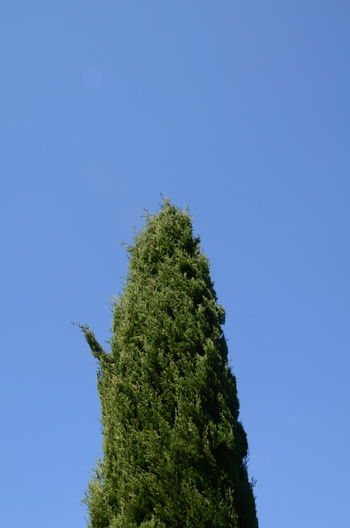 #Blue #emptyspace #green #minimalist #rigate #skylovers #southoffrance Beauty In Nature Blue Clear Sky Close-up Day Green Color Growth Low Angle View Nature No People Outdoors Pine Tree Plant Sky Tree