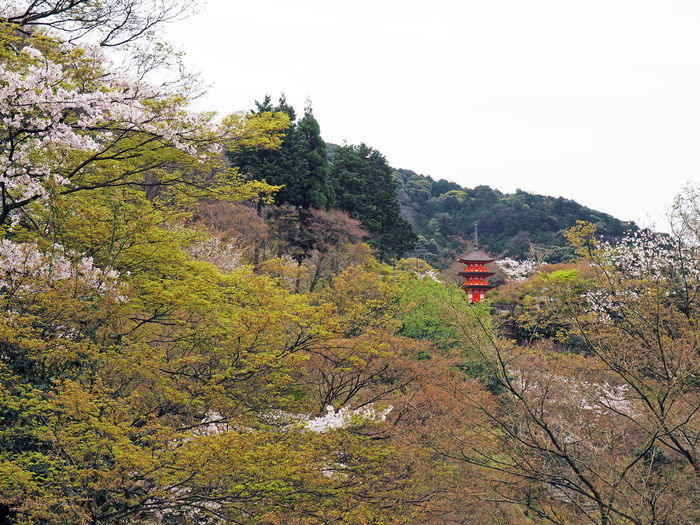 Japan Japanese  Ultimate Japan Japanese Temple Japanese Culture Temple No People Outdoors Nature Tree Trees