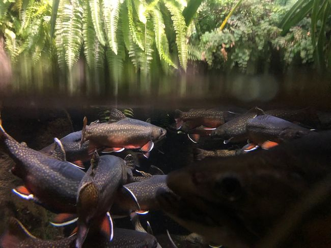 Fishermen Angler Fishing Freshwater Tail Fins Fern Fish School Of Fish School Aquarium Copy Space Brook Trout Trout EyeEm Selects Plant Tree Nature Day Group Of Animals Vertebrate No People Water Growth Animal Wildlife Animals In The Wild Transparent Beauty In Nature Outdoors Land