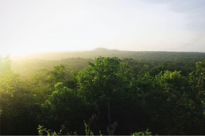 Sunrise on El Tigre - Looking to La Danta - El Mirador - Guatemala Beauty In Nature El Mirador Environmental Conservation Forest Photography Forestwalk Gadda Da Vida Guatemala Jungle Jungle Trekking Landscape Nature Outdoors Peten Tropical