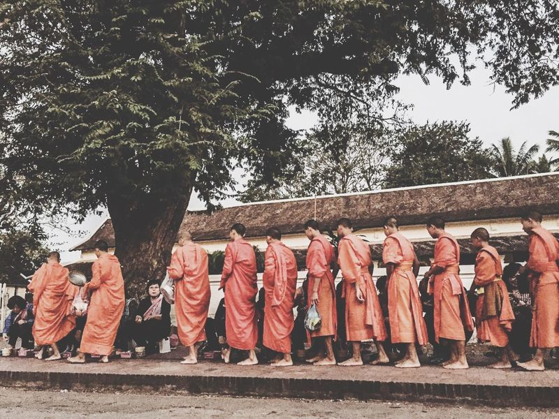 Buddhist Alms Giving Ceremony Alms Giving Monks Tree Plant Day Nature No People Side By Side Hanging Outdoors In A Row Clothing