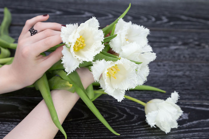 White Tulips White Tulip Holding Hands Holding Hold Date Love Meeting Pink Tulips Aniversary Beauty In Nature Bouquet Bouquet Of Flowers Celebration Event Close-up Day First Flowers Flower Flower Head Flowers Fragility Freshness Gift Nature Spring Spring Flowers Tenderness Tulip White
