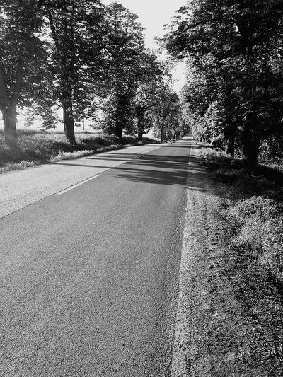 First Eyeem Photo Road Travel Chessnut Trees