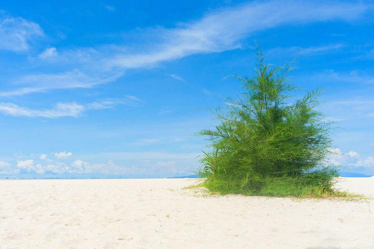 Sandy beach and